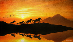 Escape (Jean-Michel Priaux) Tags: paysage landscape horse savage unreal surreal sun sunset photoshop painting paintingmatte paintmapping anotherworld poetic poetry shadow shadows dream dreaming dreamland
