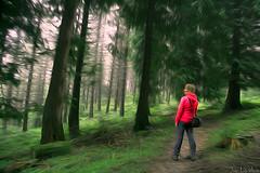 camino de Ojo Axular 1 (juan luis olaeta) Tags: art arte fujifilmxpro1 basoa bosque forest photoshop lightroom axular bizkaia gorbeia pagomakurre