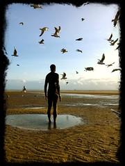 Hitchcock-esque Scene (Deydodoe) Tags: greatbritain britain england 2017 uk seaside seashore sea flock gulls gull birds bird seagull seagulls beach publicart installation artinstallation art sculpture anthonygormley gormley anotherplace mersey merseyside liverpool crosby iphone