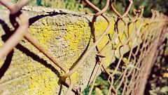 2017-08-29_10-37-01 (dijetesvemira) Tags: fence ograda plot rust hrđa drvo tree žica wire old depth blur focus dubina fokus
