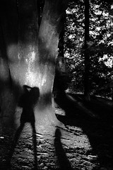 Untitled 355 (Takako Kitamura) Tags: shadow nature blackwhite fluffy tree selfie