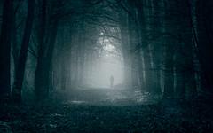 The endless meditation on the soul (Ans van de Sluis) Tags: ansvandesluis forest woods fog surreal foggy mist light trees nature portrait people art fineart monochrome endless meditation mystical