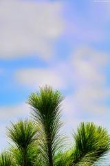 Living (Blas Torillo) Tags: puebla méxico mexico plantas plants ramas branches verde green nubes clouds cielo sky naturaleza nature belleza beauty beautiful minimalismo minimalism minimalista minimalist fotografíaprofesional professionalphotography fotógrafosmexicanos mexicanphotographers nikon d5200 nikond5200