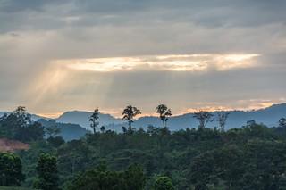 mae fah luang - thailande 10