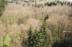 000632560017 (wsiulstfo) Tags: poland forest podlasie 35mm minox35gl