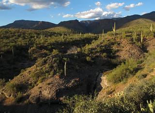 Wild Arizona