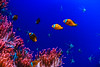 IMG_3725 (nas_chudo) Tags: acquariodigenova fish sea underthesea marine sealife seaworld underwater nemo colourful