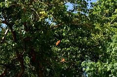 USA Trip 2017 (jaffa600) Tags: unitedstatesofamerica unitedstates usa america stateofflorida florida miami cityofmiami floridakeys thekeys keywest keylargo butterflies butterfly