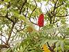 2017-08-19_14-58-40 (torstenbehrens) Tags: flower nature bokeh olympus ep1 digital camera