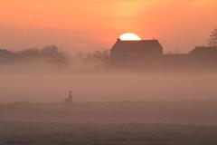 20170402-Canon EOS 750D-4018 (Bartek Rozanski) Tags: zoeterwoude zuidholland netherlands spring nederland fog mist goose geese polder green heart groene hart holland nature frost