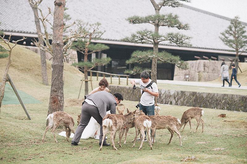 [京都婚紗]拍攝景點奈良公園