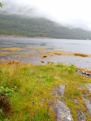 ScotlandWest-201708-3-LochCreran-Summer (Tony J Gilbert) Tags: oban gatewaytothewesternisles lochfyne stcatherines scotland scubadiving lochleven theslates ballachulish lochcreran nikon nikond300 60mmlens underwater underwaterphotography travel travelogue scottishtravel scottishscubadiving scottishlandscapes scottishwildlife