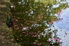 _DSC8155 (vhbin) Tags: 담양군 전라남도 대한민국 a99ii a99m2 명옥헌 담양출사지 담양 배롱나무 백일홍 꽃사진 연꽃 해바라기