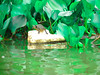 little Sweet <3 (Estefany Keitlyn) Tags: tortuga panama canal gamboa basura green