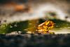 Autumn is Here (Nicholas Erwin) Tags: autumn fall leaf nature reflection water puddle bokeh depthoffield dof nikon d610 70200f4vr waterbury vermont vt unitedstatesofamerica usa america fav10 fav25 fav50