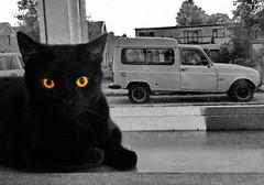 ca(r)t (Mattijsje) Tags: car cat bw black white blackwhite zwartwit yellow eyes r4 renault4 renault 4f6 r4f6 doerak looking hypnotizing hypnotising auto combi favorites favorieten driemond holland nederland netherlands cute mooi beautiful great fantastic street window littledoglaughednoiret