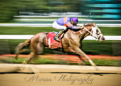 Causeway Cutie (EASY GOER) Tags: belmontpark horseracing blur horse racing sports equine thoroughbred thoroughbreds races horses canon 5dmarkiii