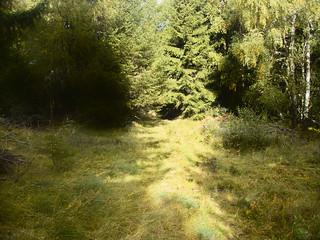 Forêt du Ché ce jeudi