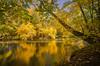 Herbst - autumn (Felix Ott) Tags: autumncolors autumnatmosphere autumn woods forest forestimages nature herbst herbstfarben herbststimmung herbstfärbung wald bach fluss river creek baum wasser