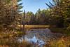 Ottawa National Forest (nikons4me) Tags: michigan mi up upperpeninsula uppermichigan ottawanationalforest swamp wilderness pines pine trees northwoods canoneos5dmarkii autumn ironcounty marsh