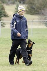 TB0A4704 (templeinmn) Tags: 2017 fall ipo mvsv schutzhund trial