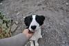 I found a friend (Javiera C) Tags: chile cajón cajondelmaipo cañón canyon santiago montaña mountain dog perro friend amigo friendly pet blackandwhite mascota