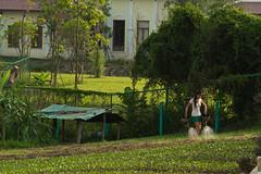 2017_04_26LuangPrabang193 (Andi [アンデイ]) Tags: laos travel travelphotography street streetphotography seasia southeastasia lao newyear savhannaket vientiane vangvieng luangprabang canon sigma sigmaa nature village rural buddhism