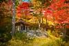 Red (Takeuchi@photo) Tags: autumn nature forest shade nikond750 tamron2875mmf28 japan yamagata 紅葉 神社 山形