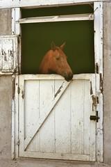 Cluny (Saône et Loire) (Cletus Awreetus) Tags: france bourgogne saôneetloire cluny haras jument cheval animal animaldomestique box porte bois