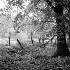 Mamiya374 (salparadise666) Tags: mamiya c330 sekor 80mm orange filter fomapan 10064 caffenol rs 13min nils volkmer vintage analogue film medium format tlr camera landscape fence nature contrast light view bw black white monochrome square hannover region niedersachsen germany