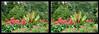 Longwood Gardens Flowers 2 - Crosseye 3D (DarkOnus) Tags: crossview crosseye pennsylvania buckscounty panasonic lumix dmcfz35 3d stereogram stereography stereo darkonus longwood gardens flowers scenic scenery flower botanical