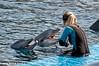 Oceanografic Valencia (OcDiego) Tags: oceanográfico oceanografic l´oceanografic valencia oceanograficvalencia delfín dolphin