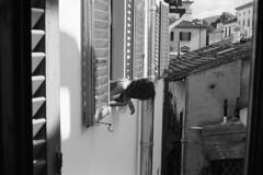 untitled by giacomo tiberia -