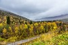 Dunderlandsdalen (Einar Schioth) Tags: dunderlandsdalen trees tree rain sky day road canon clouds cloud autumn autumncolors vividstriking nationalgeographic ngc norway norge nature nordland landscape photo picture outdoor einarschioth