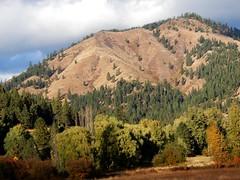 Blewett Pass and Kittitas Valley (starmist1) Tags: mountains hills slopes forest trees meadows fallcolor autumn fall october