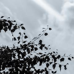 Autumnal [10/31]
