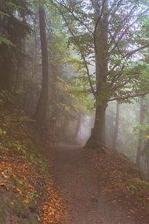 Wald in Südtirol