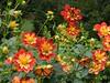 Along the Garden Path (vmi63) Tags: capturenx2 nikondx35mmf18 nikond7100 pennsylvania kennettsquare longwoodgardens