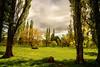 Rural Beauty (Kevin_Jeffries) Tags: d800 nikon kevinjeffries rural farmland spring nature trees sheep springtime nikkor newzealand canterbury bright crisp
