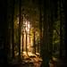 Woodland temple. (Velmerc) Tags: light nature woodland woods trees sunlight atmospheric wild outdoors mist forest wood tree