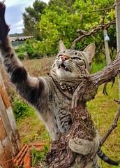 Ah! Vou te pegar!!! (Paulo Mattes) Tags: gato gatos galaxys7edge mobile goodmorning good cat cats felino felinos felines catcatsgatofelino natgeo naturelovers natureza nature brazil brasil br