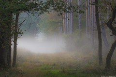 Automne... (jymandu) Tags: au brumes bois boisrivièrenaturearbresforêt