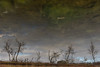 Aliens visiting (jankurtjohansen) Tags: bjørnfjell fjell høst speiling nordland norway aliens mirror
