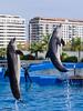 OCEANOGRÀFIC 18 (Sachada2010) Tags: sachada sachada2010 javier martin olympus epl6 valencia micro 43 panasonic 14mm zuiko 8mm 45mm f18 40150mm r oceanografic fondo marino delfines dolphins 9mm fisheye