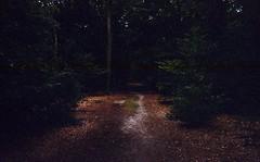 path in the dark forest (Jos Mecklenfeld) Tags: minox35el minox35 minox kodakcolorplus kodak colorplus epsonv500 expiredfilm film analog analogue ishootfilm kloosterbos terapel westerwolde groningen netherlands niederlande nederland forest bos wald hiking wandern wandelen path weg pad wanderweg