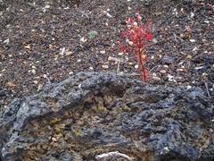 603-14-P9141282 (vgwells) Tags: approved sedona arizona grand canyon national park scottsdale montezuma castle jerome verde railroad sunset crater wupatki