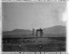 (sol exposure) Tags: jackson montana polaroid 195 fuji fp3000b papernegative goop