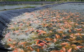 Fish-Farming_in_India