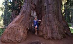 "Sequoia National park, California, US August 2017 1646 (tango-) Tags: sequoia sequoianationalpark west ovest western us usa unitedstates states america statiuniti statescaliforniaususaunited statesamericawestern americawestovestамерикасоединенные штатысша美國""美國""美國amerikavereinigte staatenアメリカ米国米国соединенныештаты сшаususaamericastati"