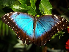 Butterflies (Kimberly_CH1993) Tags: butterfly vlinders aan de vliet blue color macro nature pretty